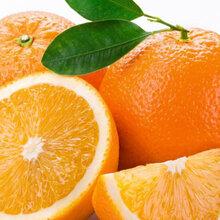 相位贛南臍橙優惠促銷