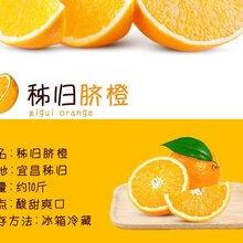 秭归脐橙纽荷尔甜橙宜昌三峡特产新鲜现摘约10斤包邮