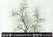 倪瓚元代畫家詩人作品鑒定和價值評估深圳太古