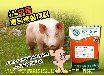猪饲料配方中猪用复合预混料的厂家