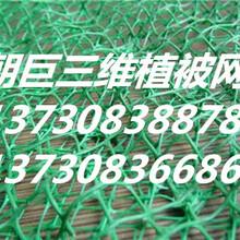 万州三维植被网、万州绿化三维植被网、万州三维植被网批发、万州三维植被种草网