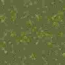 WI-38传代形式细胞株哪提供