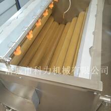果蔬去皮清洗机的价格高产量清洗机图片