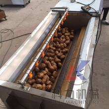 毛刷自动去皮机土豆萝卜去皮清洗机现货图片