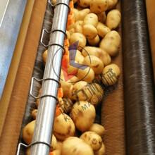 不锈钢毛辊去皮清洗机土豆去皮清洗机售后比较完善图片