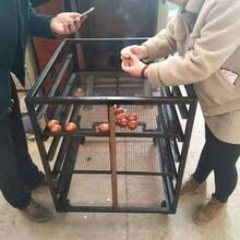 烘干咸鱼机器,304材质烘干设备,自动烘干机器图片