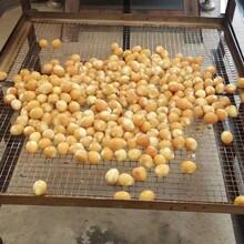 熏各种蛋上色机,30型熏蛋上色机多少钱一台,烟熏炉生产厂家图片