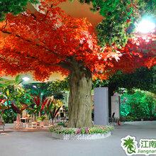 深圳市仿真植物工厂,仿真大树视频,仿真椰子树图片,仿真海藻树价格,仿真植物墙设计