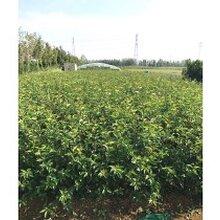 土壤水分对蓝莓生长有什么影响图片