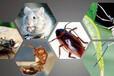 北京灭虫杀虫服务,洗手间清洁保洁服务,去甲醛服务