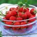 草莓批发价奶油草莓双流草莓