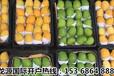 清香可口的缅甸芒果正走向世界各各国家