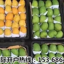 清香可口的緬甸芒果正走向世界各各國家圖片