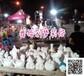 武汉市石膏像娃娃白胚批发厂家石膏彩绘娃娃哪里有批发小本生意投资开店摆摊好项目