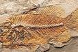成都观澜文化鉴定化石