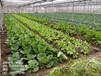 广东有机蔬菜病虫害防治公司经验丰富可靠