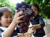 云南能防治病虫害的技术培训提高作物产量