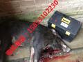 广西高压电网捕猎器图片