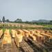 建筑模板黑模板双面覆膜规格齐全使用之后不膨胀优质松木
