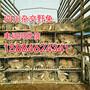 宜宾杂交野兔种兔批发,宜宾杂交野兔养殖基地?宜宾杂交野兔市场行情?图片