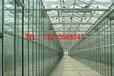 建造玻璃温室大棚公司的联系方式是什么
