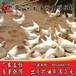 文山蛋鸡苗什么价格-海兰灰蛋鸡苗-海兰褐蛋鸡苗出售