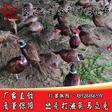 惠州哪里有野鸡苗卖-龙门七彩山鸡苗什么价格图片