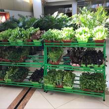 北京盆栽有机蔬菜基地,盆栽有机蔬菜免费配送,昱旸天地图片