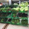盆栽有机蔬菜免费送货上门,北京盆栽有机蔬菜基地,昱旸天地