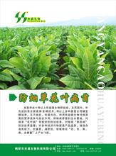 山西有机肥厂家防烟草花叶病菌剂