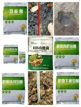 微生物菌剂生物有机肥专用菌剂鹤壁禾盛功能菌有机蔬菜果树专用肥