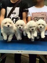 家有萌宠才是幸福,快乐,何以解忧,唯有狗狗