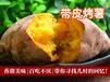 四川泉城烤薯加盟,多年经验助你轻松开店没钱一样能做