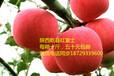 新鲜水果苹果