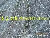 GPS2主动防护网绞索网山体防护网现货供应