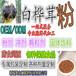 白桦茸多糖白桦茸提取物白桦茸粉30%含量白桦茸提取贴牌代加工