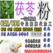 红枣茯苓粉养生粉冲调饮品五谷粉贴牌代工