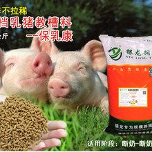 乳豬教槽料配方圖片
