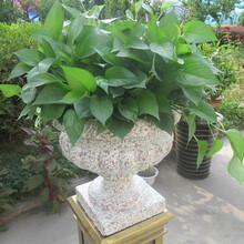 欧式花盆模具
