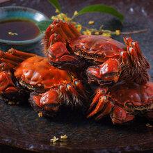 螃蟹的正确吃法