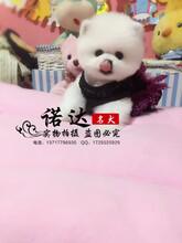 北京哪家犬舍信誉最好