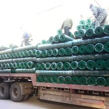 荷兰网波浪网PVC涂塑电焊网PVC涂塑荷兰网浸塑电焊网圈玉米网