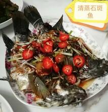 模塊魚池養淡水石斑魚養殖圖片