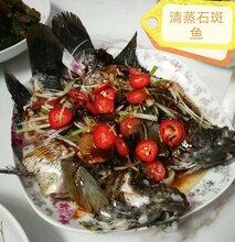 模块鱼池养淡水石斑鱼养殖图片