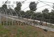 湖北孝感Q235B工程温室水果蔬菜大棚钢管热镀锌钢管农户大棚