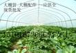 安徽芜湖大量供应大棚镀锌管大棚配件大棚管免费送货