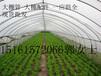 江苏徐州各种热镀锌钢管农用大棚管DN150镀锌管供应商