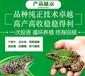青蛙养殖黑斑蛙养殖-稻谷青蛙混养殖,双收益。