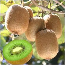 每天一个猕猴桃,排毒养颜少不了图片