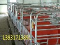 泊头永质养猪设备生产母猪产床,保育床,单体保育床,自动料线图片